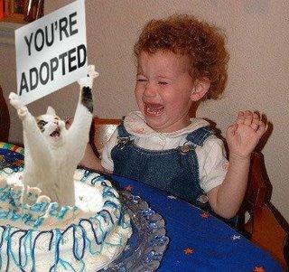 cat cake mannerism