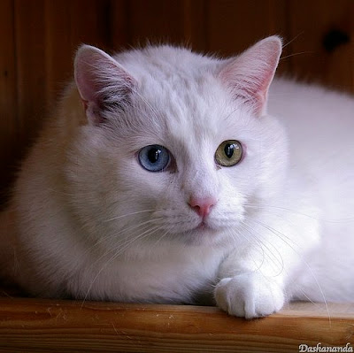 بيضاء جميلة