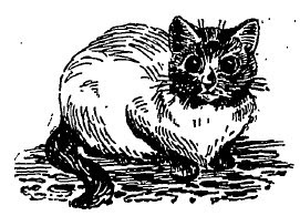 drawing of a siamese cat 1897