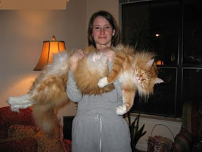 above is ginger cat is a male maine coonsiberian type probably not purebred this is a cat that is heavily featured on the internet heavens knows why - Biggest Cat In The World Guinness 2012