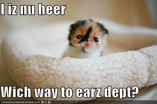 funny-pictures-kitten-needs-ears.jpg