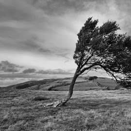The Answer My Friend by Janet Morgan - Landscapes Mountains & Hills ( mountain, tree, black and white, wales, scenery )