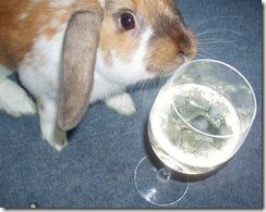 bunny wine 1