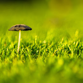 Fugus In The Grass by Simon Forster - Nature Up Close Mushrooms & Fungi (  )