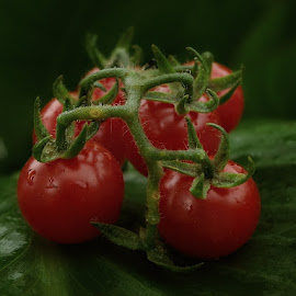 by Ksenija Glavak - Nature Up Close Gardens & Produce