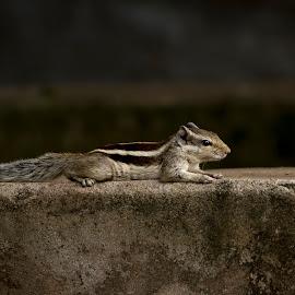 Sun bath by Monish Kumar - Animals Other (  )