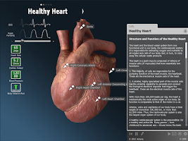 Screenshot of bodyxq heart