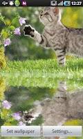 Screenshot of Cute Cat