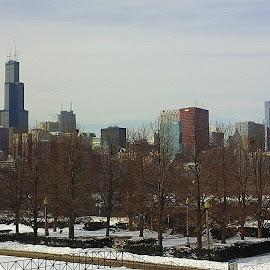 Chicago Skyline by Constance S. Jackson - City,  Street & Park  Skylines ( skyline, skyscrapers, buildings, chicago, city )