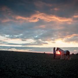 Jamie & Ines by Nicky Staskowiak - Animals Horses ( tinker, horses, backlight, sunset )