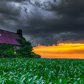 Stormy Sunset by Jon Dickson - Landscapes Prairies, Meadows & Fields ( stormy, illinois, hdr, cornfield, sunset, old barn, dramatic sky, drama, decrepit )