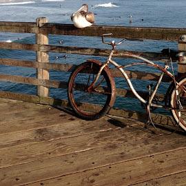 Boardwalk  by Anna Christian - Transportation Bicycles