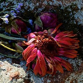 by Carl Testo - Flowers Flower Arangements ( hcl, rock, flowers )