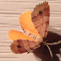 Orange Wing - Hodges#6271.1