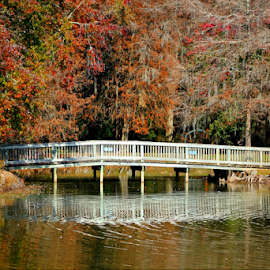 Edisto Park Bridge by Darlene Lankford Honeycutt - City,  Street & Park  City Parks ( edisto, park, waterscape, deez, dl honeycutt, reflections, bridge, south carolina,  )