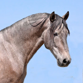 Stallion by Michelle Hunt - Animals Horses