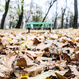 November bench by Matei Iulian - Nature Up Close Leaves & Grasses ( bench, park, ig_romania, botanic, romania, timisoara, leaves )
