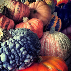 Great Gourd Selection