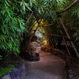 Bamboo by Darren Sutherland - Nature Up Close Gardens & Produce ( butcharts )