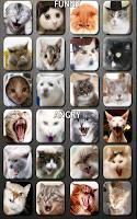 Screenshot of Cat n' Kitten Meow Sounds