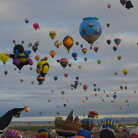 Balloon Fiesta 2014 by Terry Andrew - Transportation Other