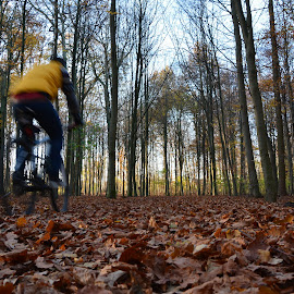 Autumn Ride by Dejan Stefanac - Sports & Fitness Cycling ( mountainbike, autumn, fall, forest, leaf, leaves, bicycle )