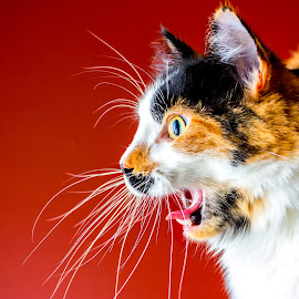 by Mark Nesseth - Animals - Cats Portraits