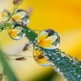 What a mess by Citra Hernadi - Nature Up Close Natural Waterdrops