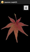 Screenshot of Japanese autumn leaves
