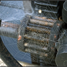 Natural Weave by Catherine Melvin - Nature Up Close Webs ( spider web decoration, nature, webbing, unique photography, macro shot )