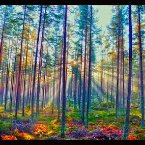 Sunligth in the forest  by Stefan Pettersson - Nature Up Close Trees & Bushes ( nature, color, beautiful, fall, forest )