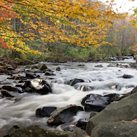 Fall Stream by Isaac Moscovich - Landscapes Waterscapes ( water, fall colors, waterscape, fall, trees, color, colorful, nature )