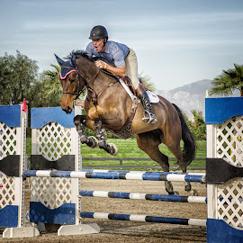 Up and Over by VJ Thomas - News & Events Sports ( horses, jumpers, sports )