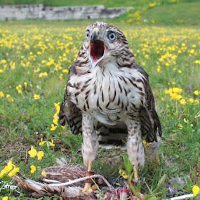 what!!!!!!!! by Elizabeth Sztejner Skillings - Animals Birds ( animals, nature, birds )
