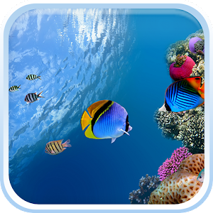 App ocean fish live wallpaper apk for windows phone for Fish live game