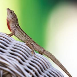 Lizard 3 by Leah Varney - Animals Reptiles ( reptiles, lizard, animals )