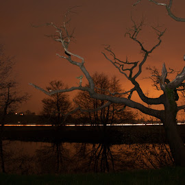 Tree at Night by Andy Pickford - Abstract Light Painting ( water, tree, light trails, reflections, pond,  )
