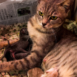 My little Cats with mom's by Syahrul Nizam Abdullah - Animals - Cats Kittens