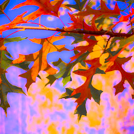 Autumn Oak by Anthony Berak - Digital Art Things ( nature, tree, autumn, edits, colors, outdoors, fall, leaf, photography, color, colorful )