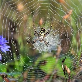 Spider Web by Eugenija Seinauskiene - Nature Up Close Webs