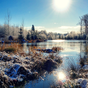 snow day by Todd Reynolds - Landscapes Waterscapes ( winter, cold, fall, snow, lake, , relax, tranquil, relaxing, tranquility )