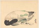 RIJKS: Shibata Zeshin: print 1882