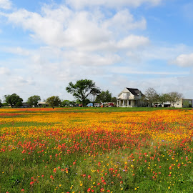 Home Sweet Home by Cathy Hood - Landscapes Prairies, Meadows & Fields
