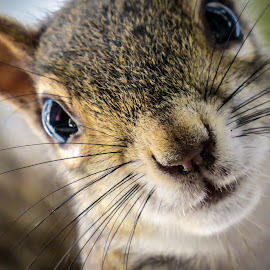 Peekaboo by Noëlle Brown - Animals Other Mammals ( cute, close up, squirrel )