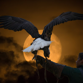 The Eagle and the Moon by Keith Boone - Digital Art Animals