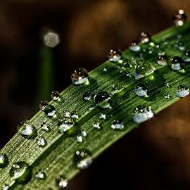 Dew by Vanja Vidaković - Nature Up Close Natural Waterdrops
