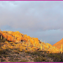 Twilight Light by Sylvia Berman - Novices Only Landscapes ( mountain, sunset, arizona, sun, rain, cactus )