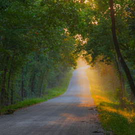 Filtered Sunlight by Greg Weseman - Landscapes Forests ( countryside, trees, road, morning, sunlight )
