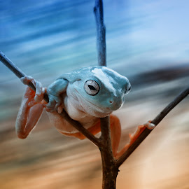 Again Alone by Frenki Jung - Animals Amphibians