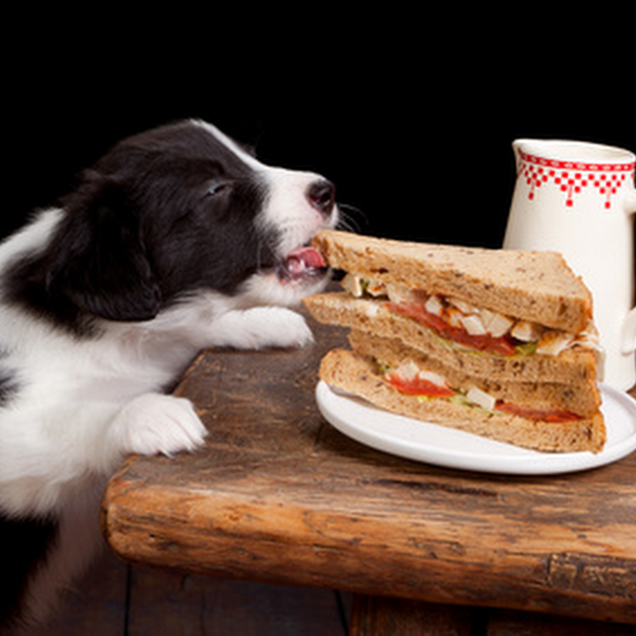 Top 10 dangerous foods for your dog
